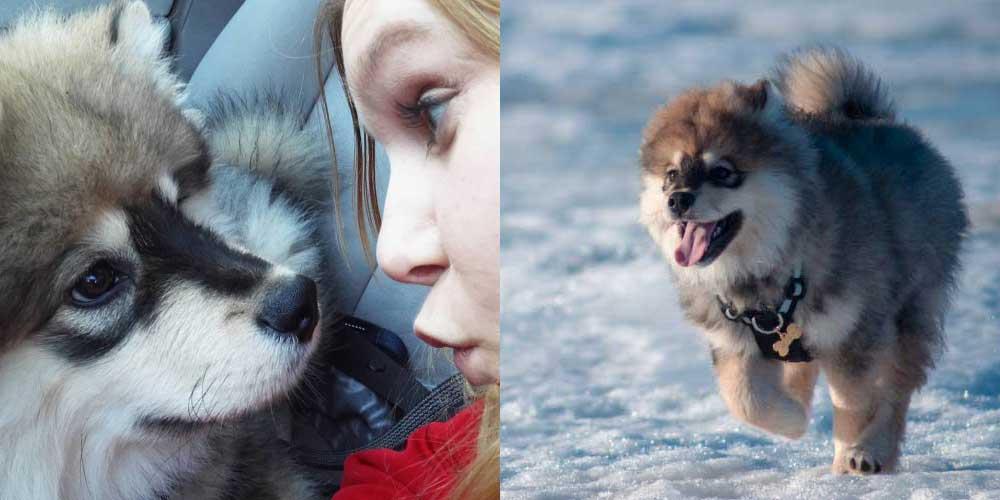 Hannan Ojanaho ja koiranpentu Sufla
